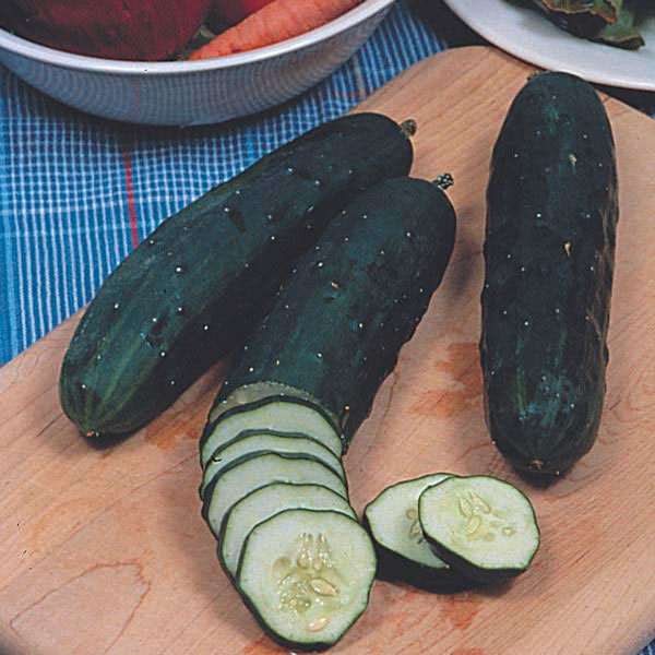 Cucumber bush: features and varieties