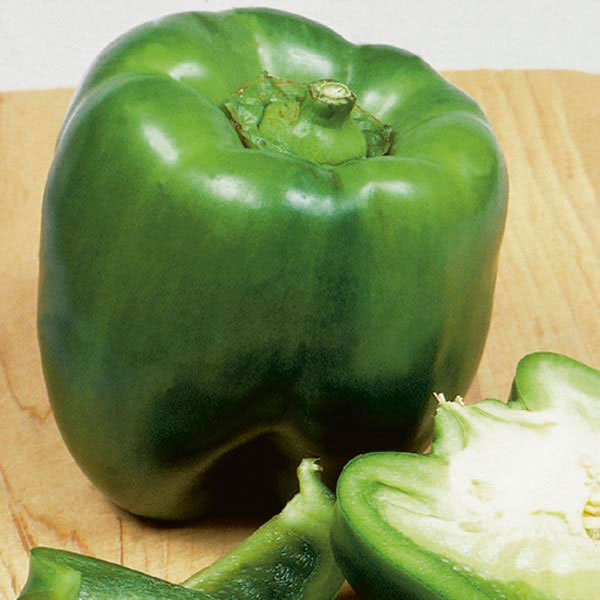Bell Pepper 'California Wonder' (Capsicum annuum)