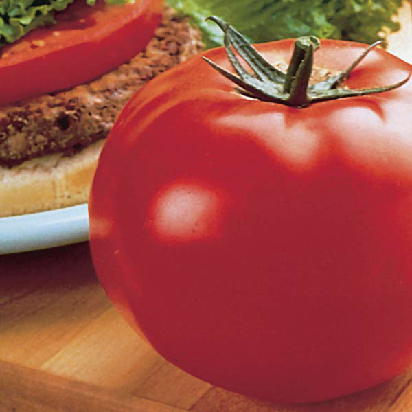 Tomato Park's Whopper Improved Cr™ (Lycopersicon esculentum)