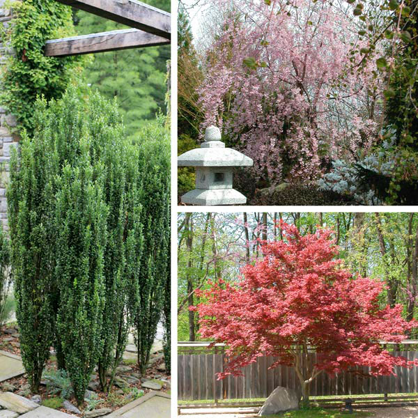 Landscaping Ornamental Trees : Ornamental trees