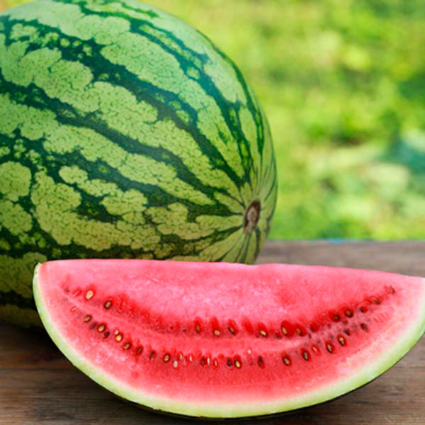 Watermelon 'Crimson Sweet' (Citrullus lanatus)