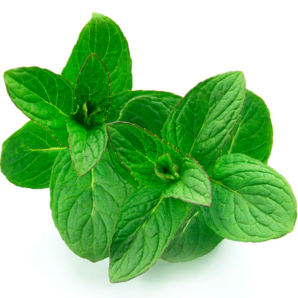 how to take care of mint plant in winter