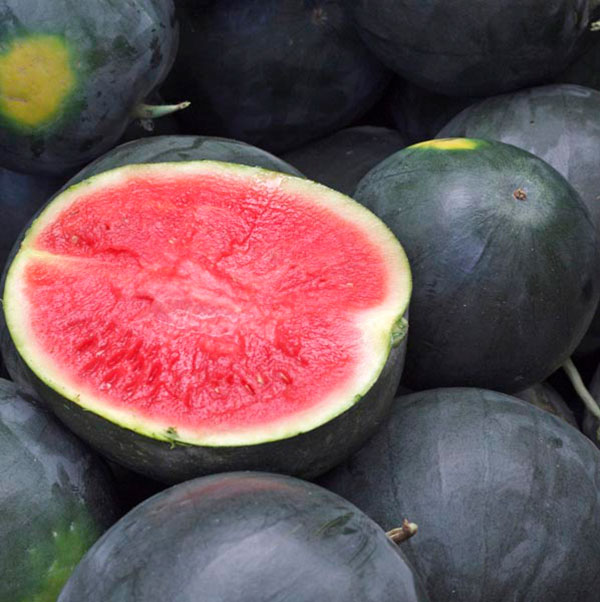 Watermelon 'Black Diamond' (Citrullus lanatus)