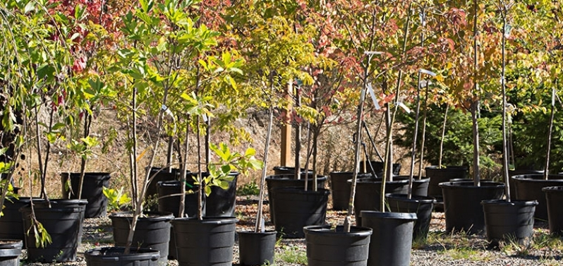 Digging into Autumn Planting of Trees and Shrubs