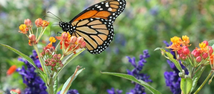 Butterfly Gardening for Kids