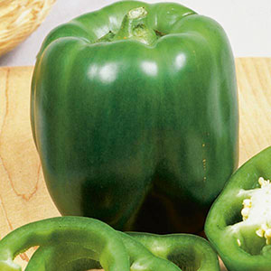 Bell Pepper 'Better Belle' (Capsicum annuum)