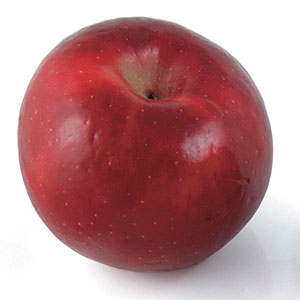 Apple 'Red Rome' (Malus pumila)