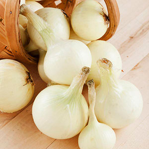 Onion 'White Spanish' (Allium cepa)
