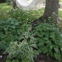 How to Create a Shady Retreat Garden