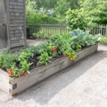 Tips for Raised Garden Beds