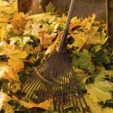 Use Fallen Leaves as Mulch