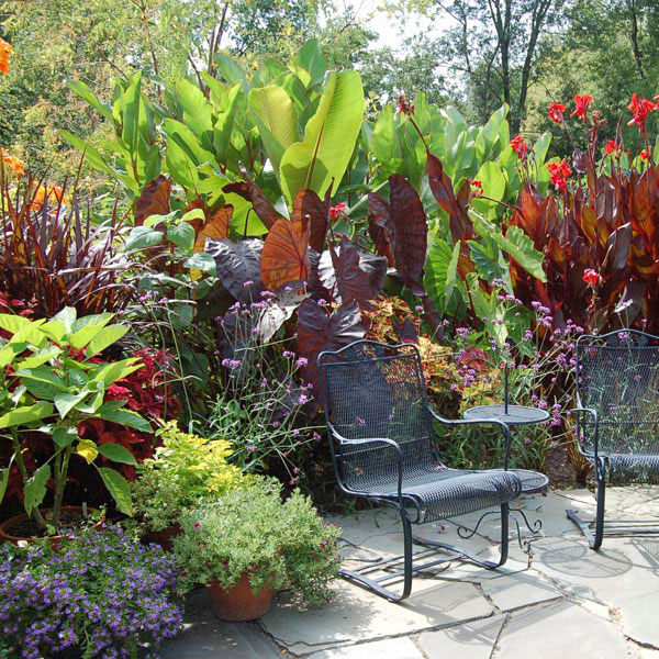 Tropical border plant my garden life for Backyard landscaping plants
