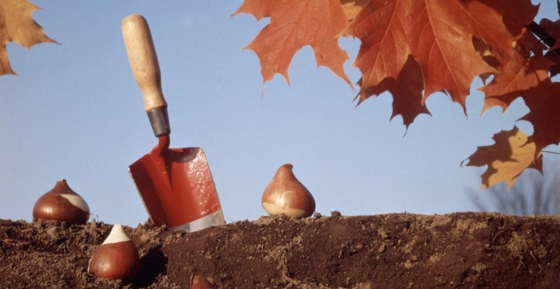 Planting Your Bulbs for Fall