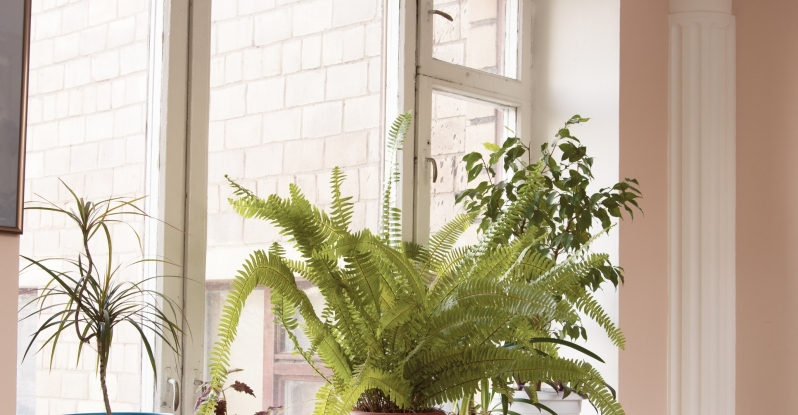 Houseplants as an Indoor Nature Connection