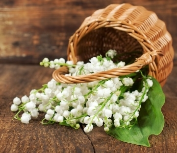 Lily of the Valley in a Basket, May Day Basket