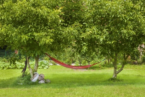 Hammock Hanging Between 2 Trees