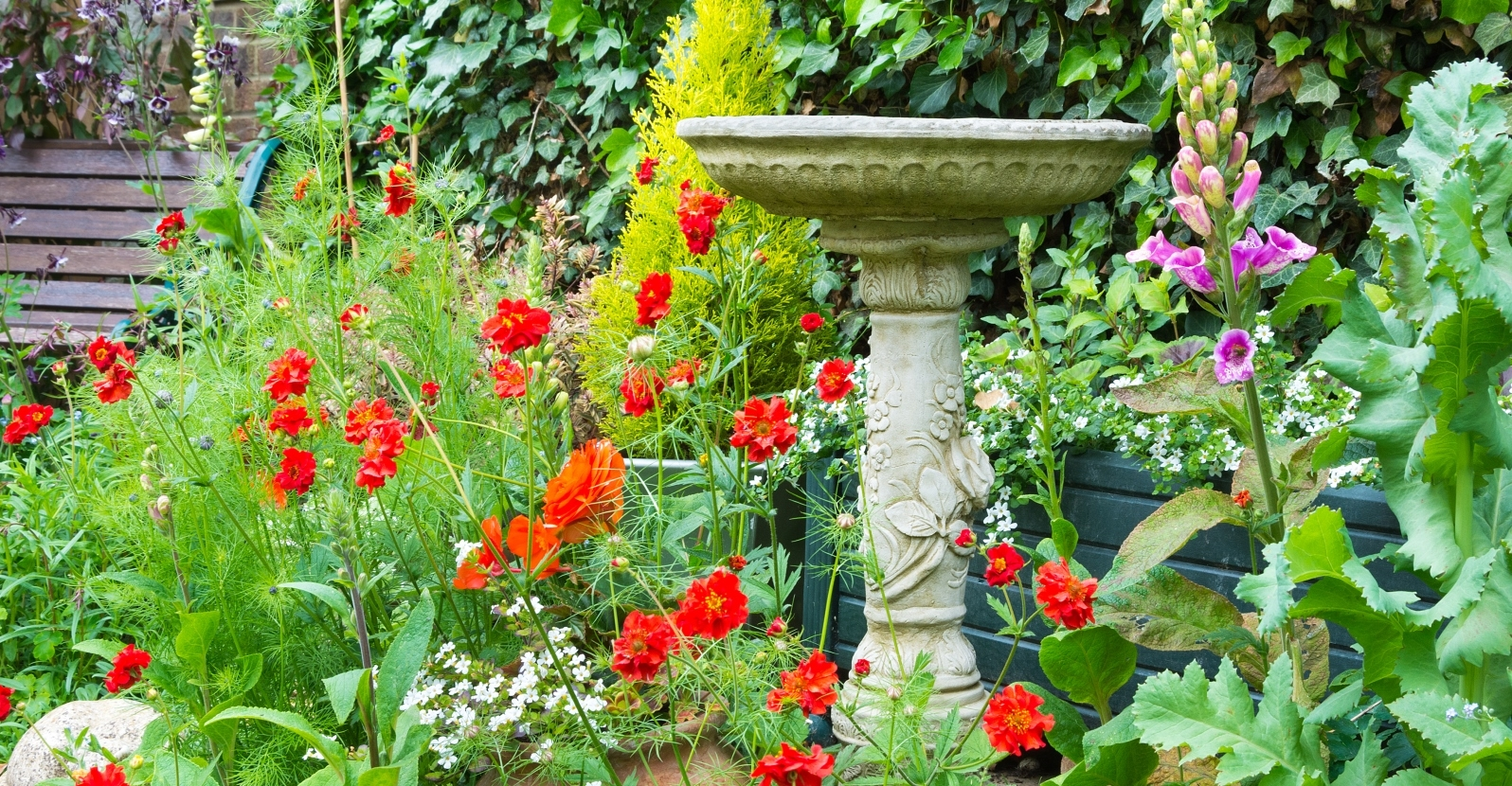 Nice Top 5 Tips: Maintaining A Bird Bath