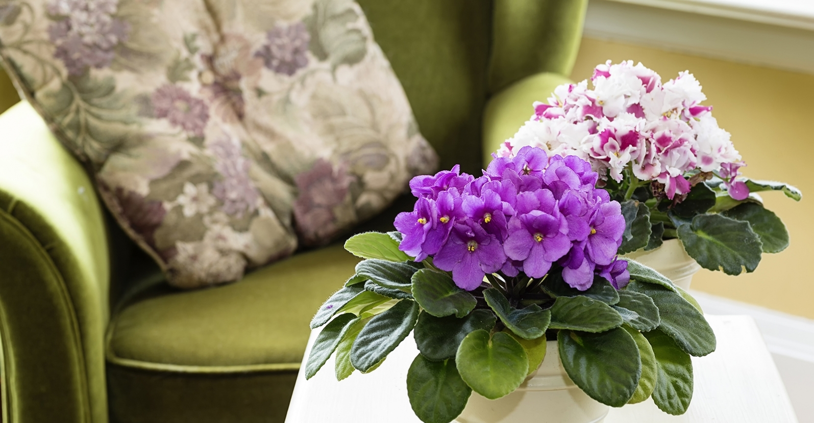 10 Tips Caring For Flowering Indoor Plants My Garden Life