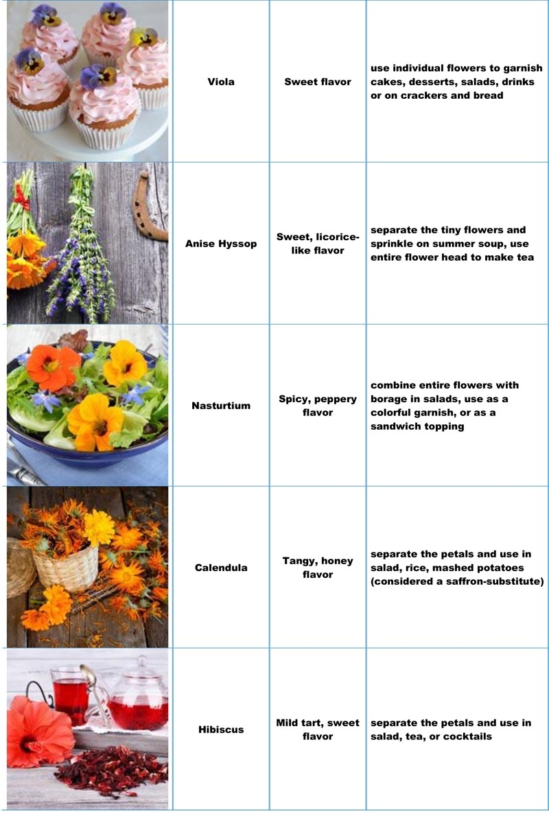 Table of Edible Flowers, Their Flavor, How to Use Them