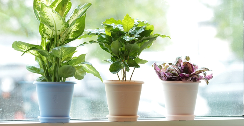 Houseplants on Windowsill