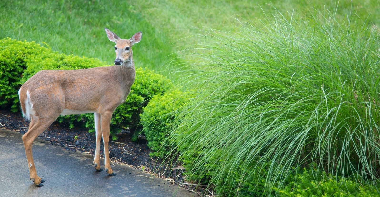 Stop Uninvited Guests...Deer