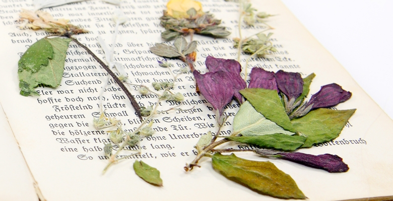 Press Dried Flowers in a Book