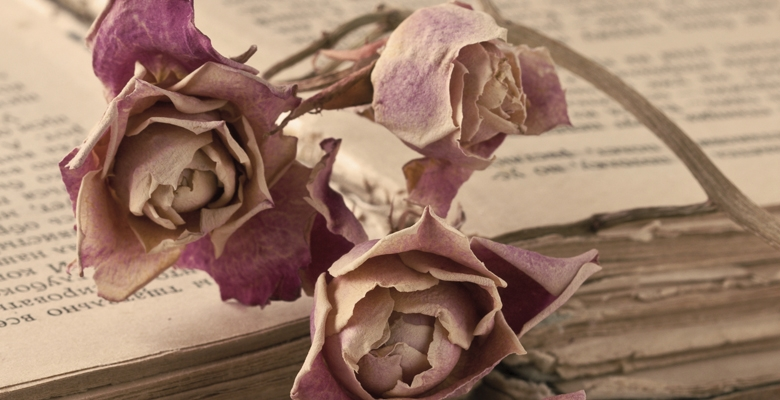 Dried Pink Roses