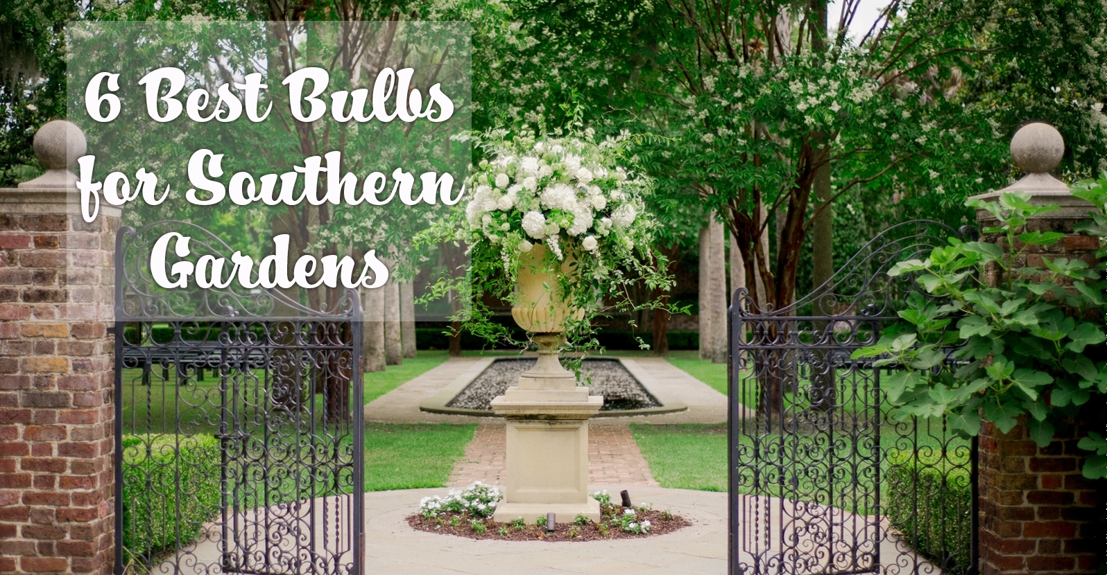 6 Best Bulbs for Southern Gardens (Zones 7-10)