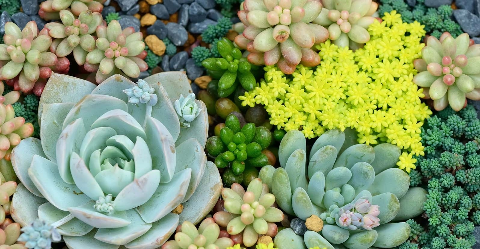 Top 5 Hardy Succulents