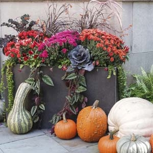 Fall Garden Containers with Pumpkins