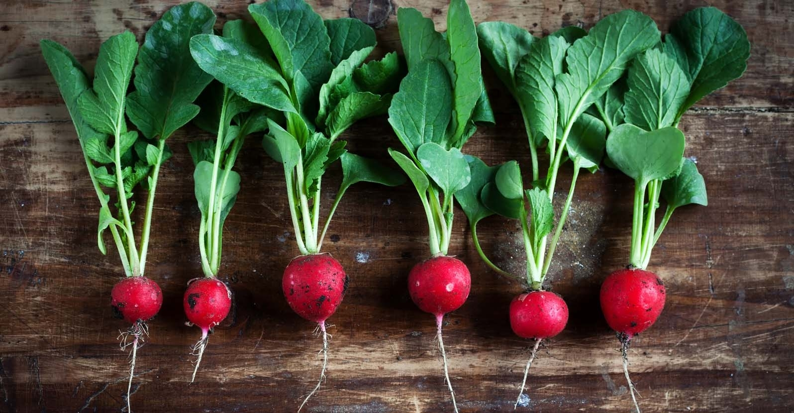5 Reasons to Grow Your Own Radishes