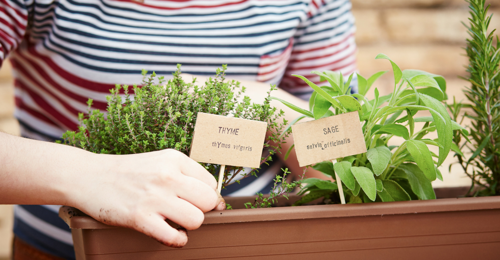 Easy and Fun DIY Garden Markers