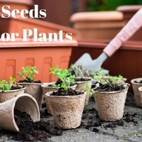 Seeds or Plants for Vegetables