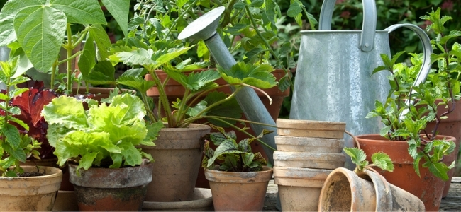 Pots, watering can and plants