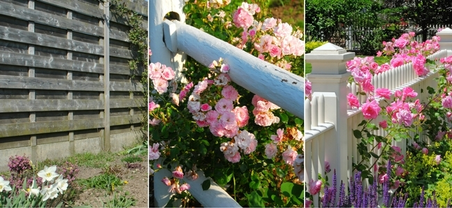 Fences - Tall, simple and white picket