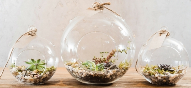 Terrariums in globes you can hang