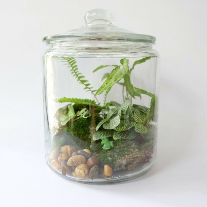 Closed Terrarium Style with Ferns and Moss