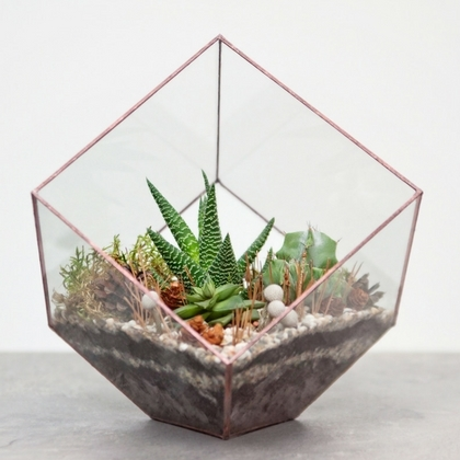 Open Terrarium Style with Haworthia, Succulents