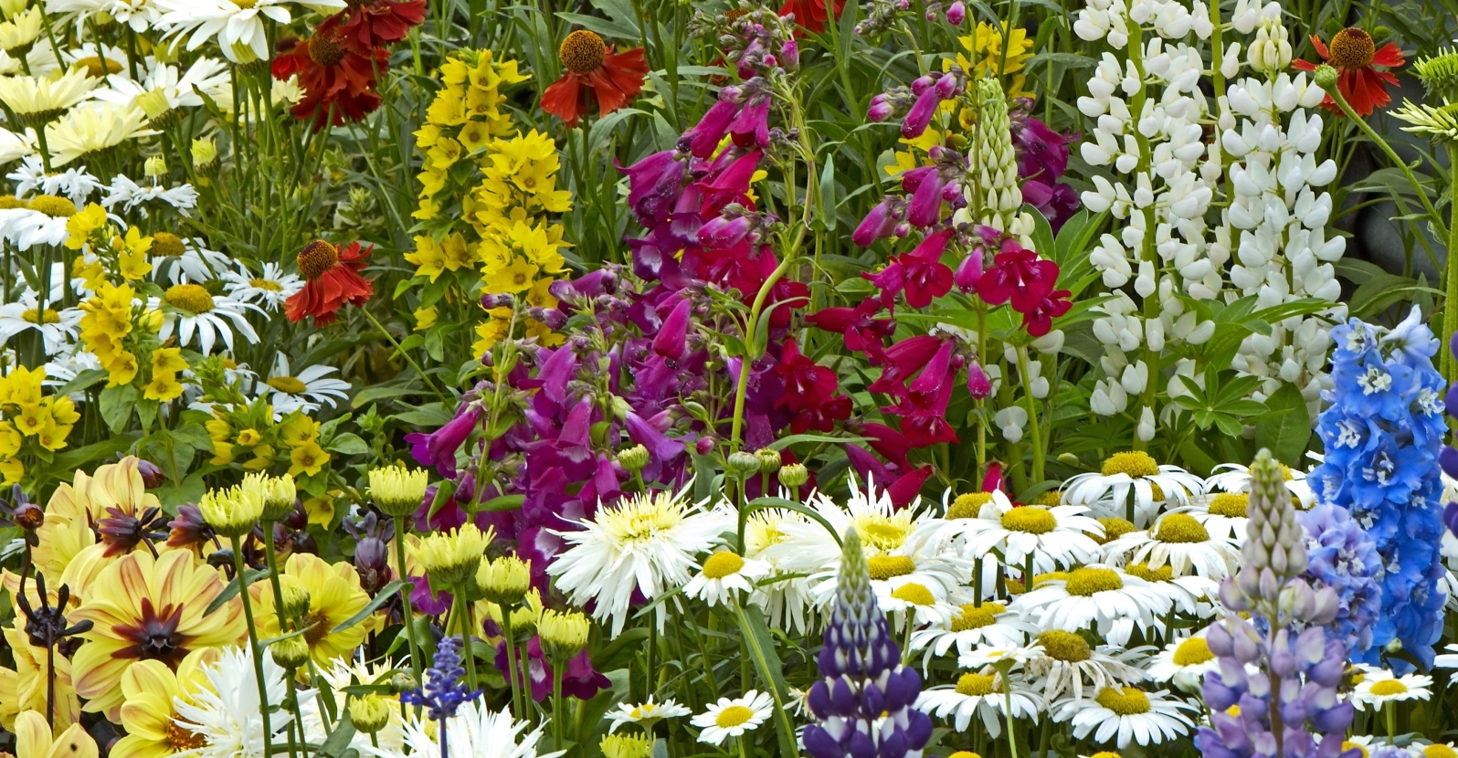 Know Your Plants Annual Vs Perennial My Garden Life