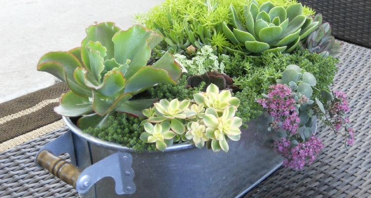 Mixed Succulent Container
