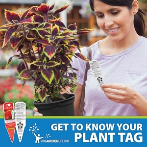Woman Reading Plant Tag and Holding Coleus, Get to Know Your Plant Tag - My Garden Life