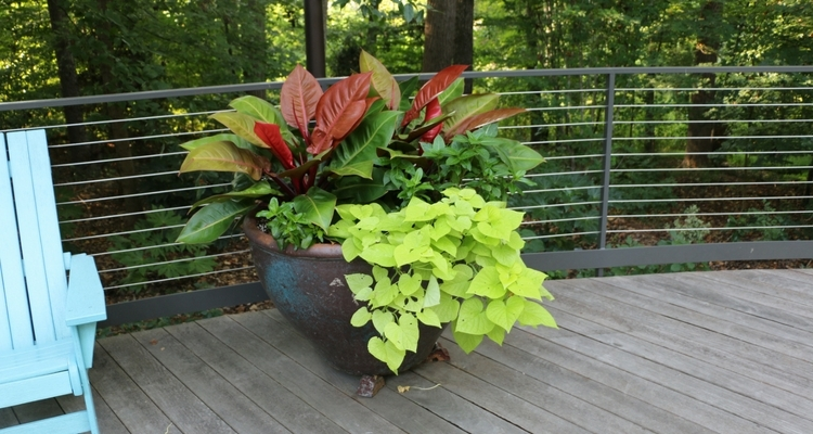 Planter of Sweet Potato Vine