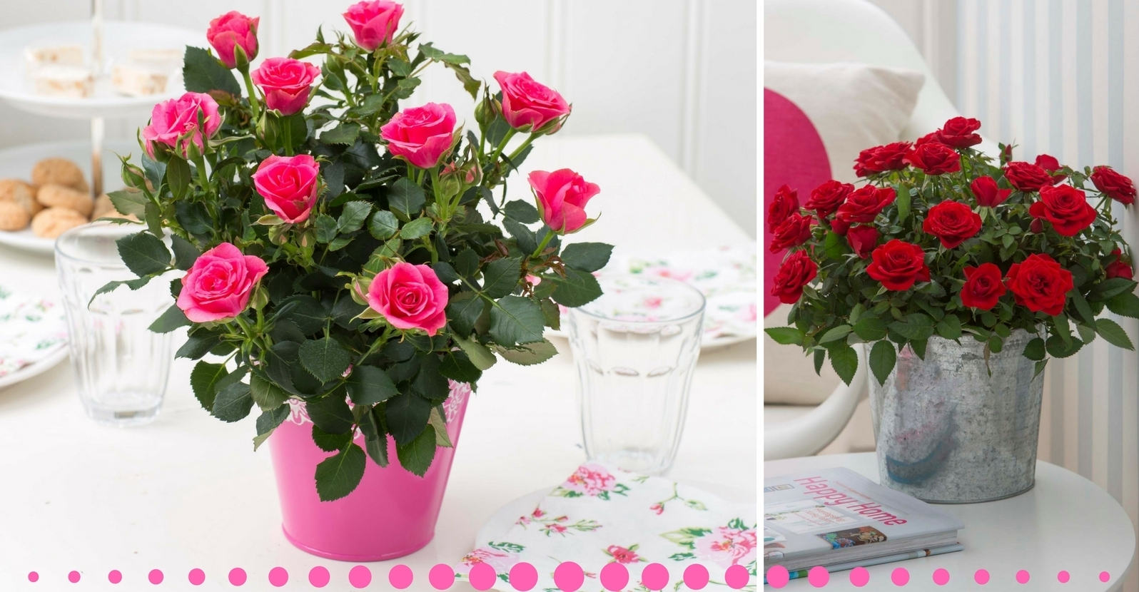 Care Tips For Fabulous Miniature Roses My Garden Life