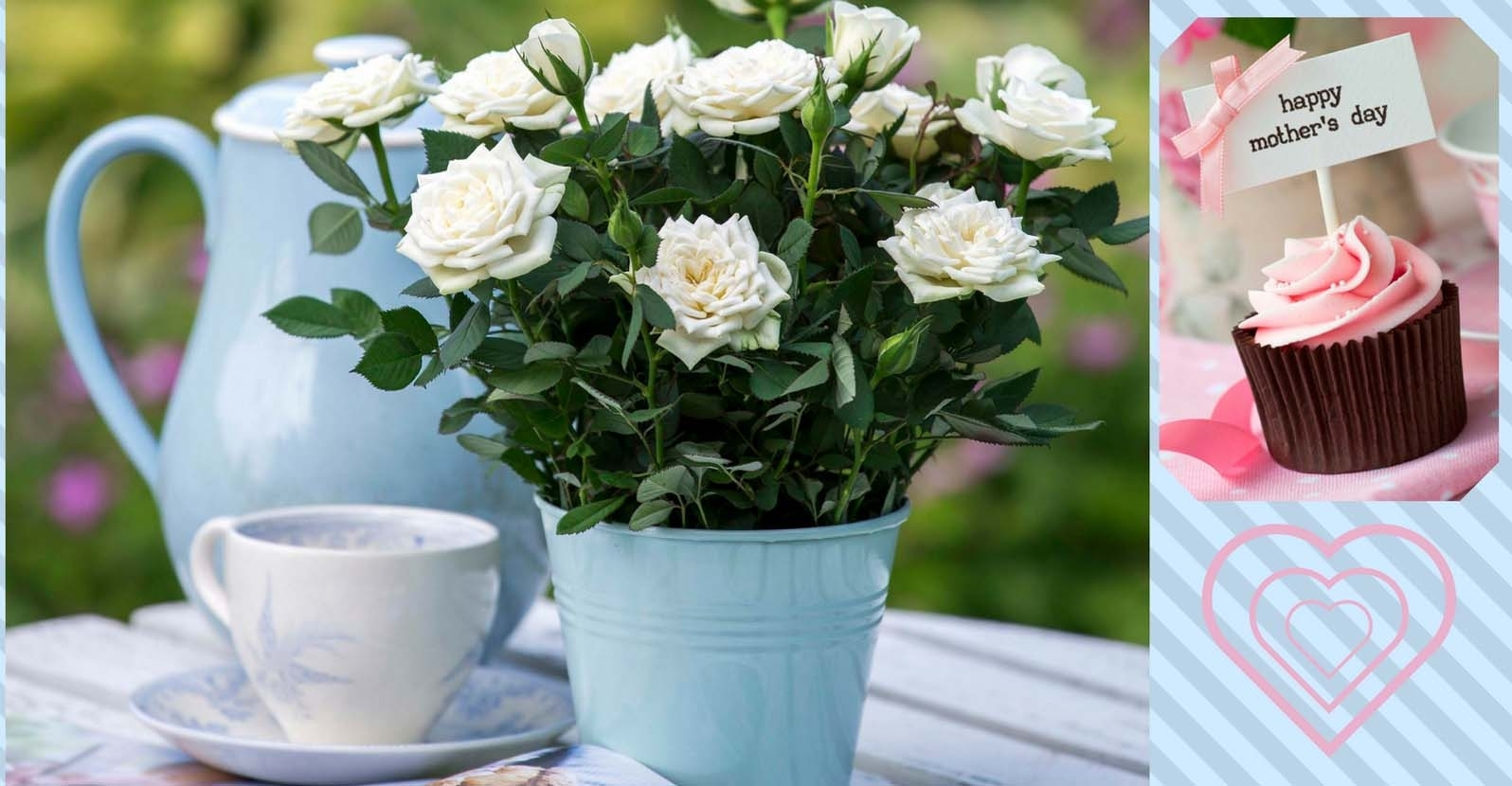 Get to Know Miniature Roses for Mother's Day