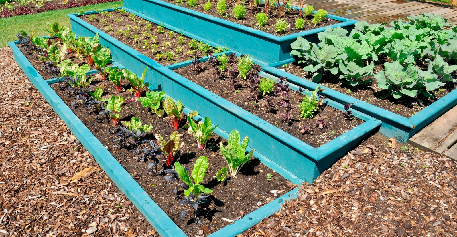 Tips for raised garden beds my garden life for Attractive raised vegetable beds