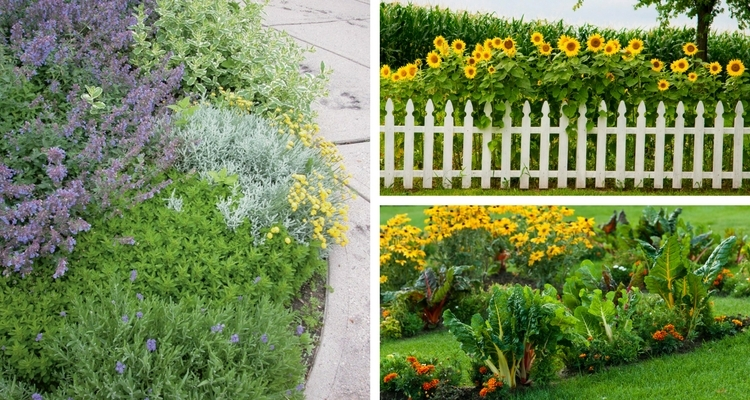 edible landscaping a new trend in outdoor living my garden life