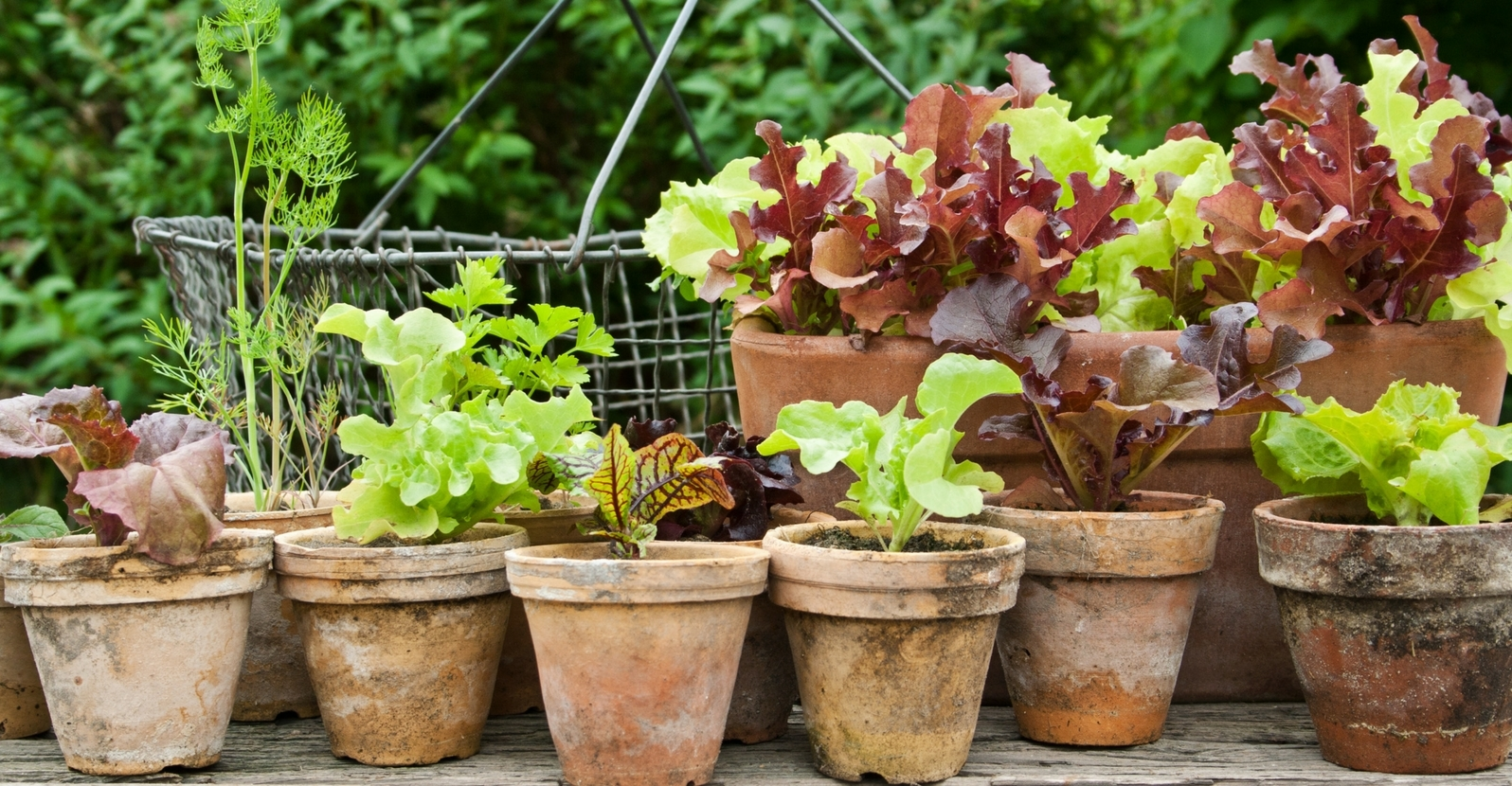 6 Beautiful Edible Plants for Containers