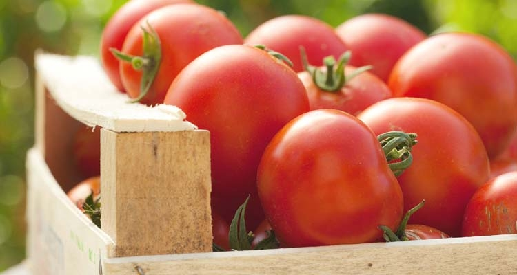 Fresh Tomato Harvest in Wooden Crate