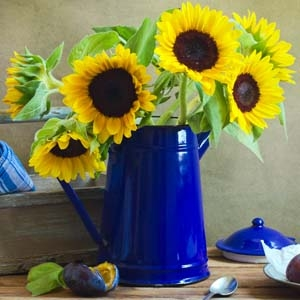 Sunflower Bouquet in Blue Pitcher