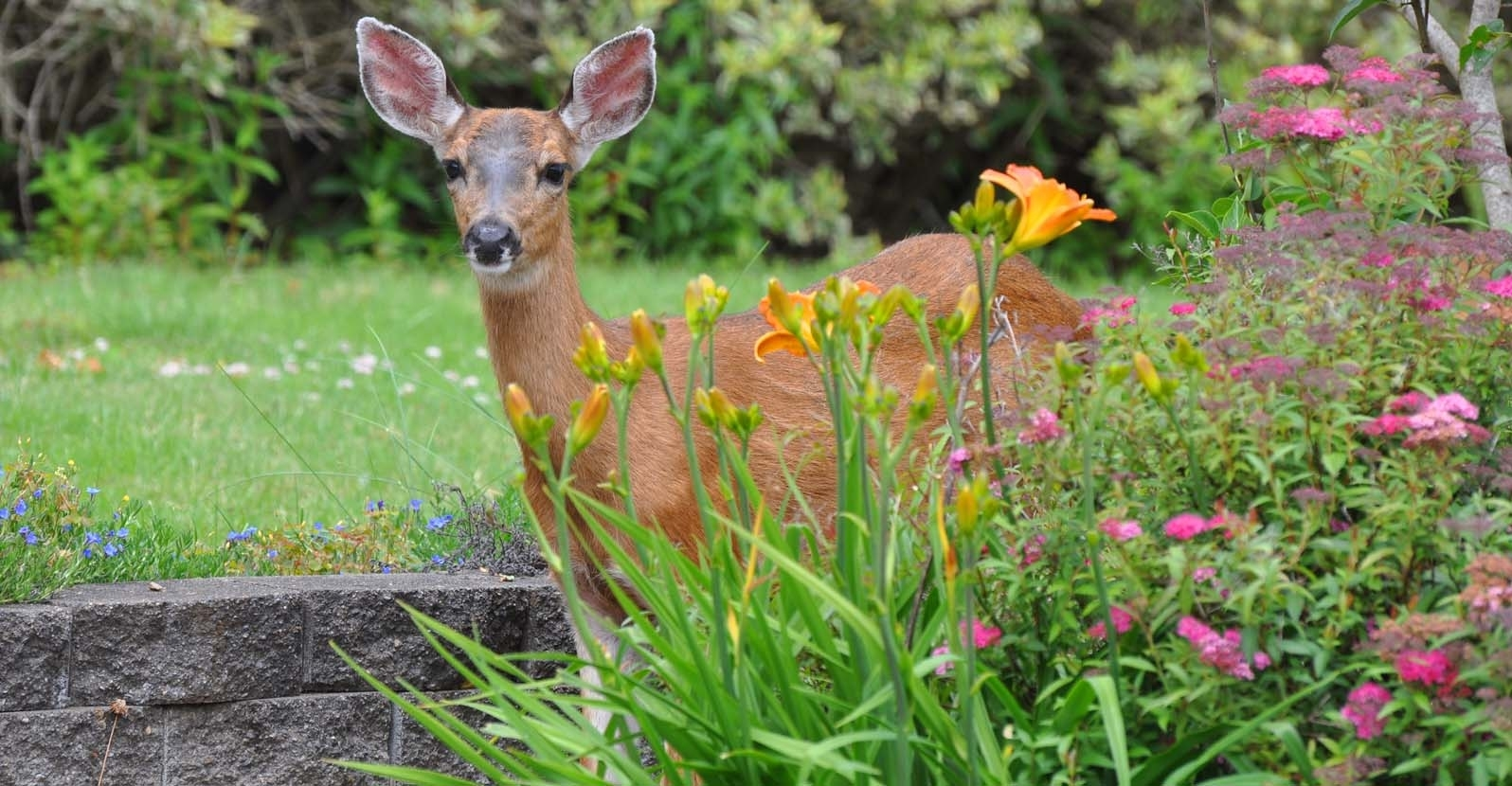 Top 10 Deer Resistant Plants for Your Garden